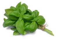 Basil, health benefits of basil, healing properties basil