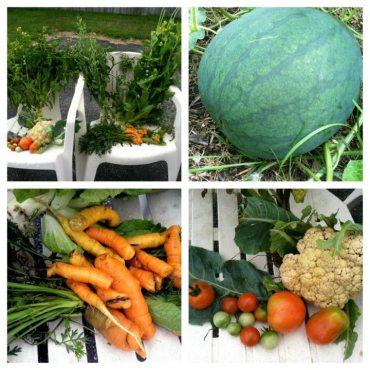 gardening, organic garden, green thumb, healing garden, benefits of gardening